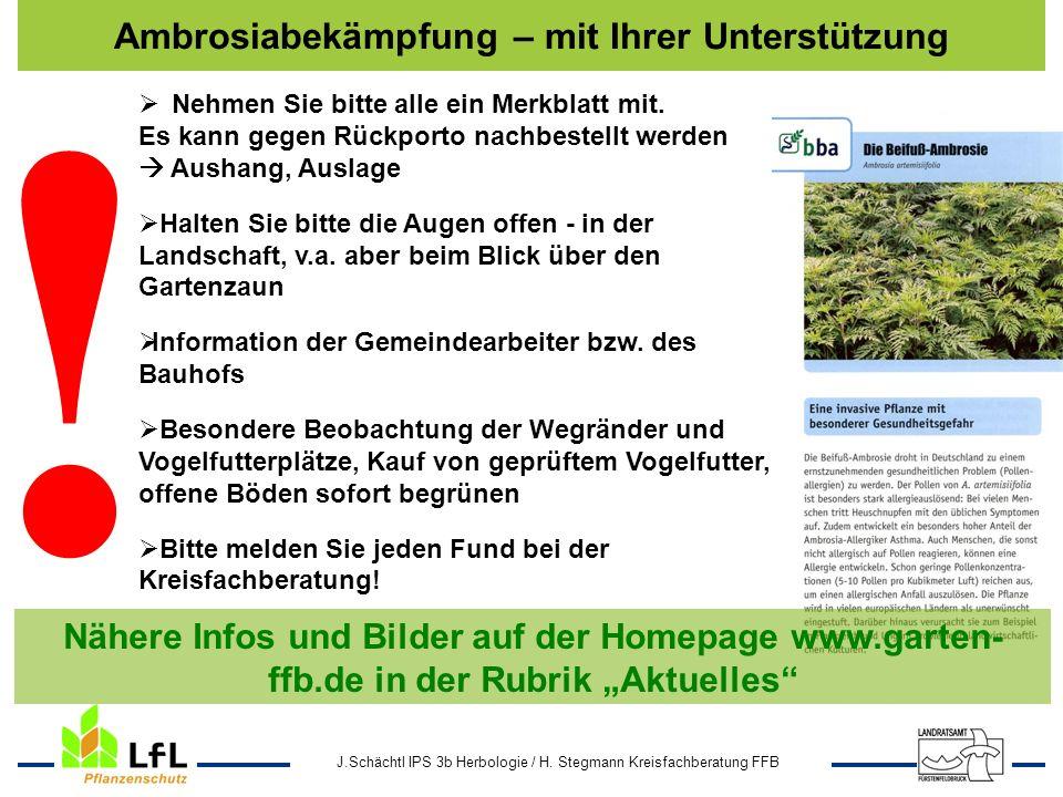 J.Schächtl IPS 3b Herbologie / H. Stegmann Kreisfachberatung FFB Ambrosiabekämpfung – mit Ihrer Unterstützung Vereine ! Nähere Infos und Bilder auf de