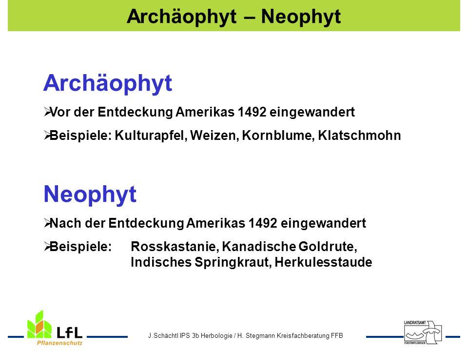 J.Schächtl IPS 3b Herbologie / H. Stegmann Kreisfachberatung FFB Archäophyt – Neophyt Neophyt Nach der Entdeckung Amerikas 1492 eingewandert Beispiele