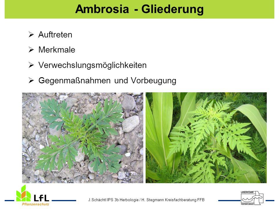 J.Schächtl IPS 3b Herbologie / H. Stegmann Kreisfachberatung FFB Ambrosia - Gliederung Auftreten Merkmale Verwechslungsmöglichkeiten Gegenmaßnahmen un