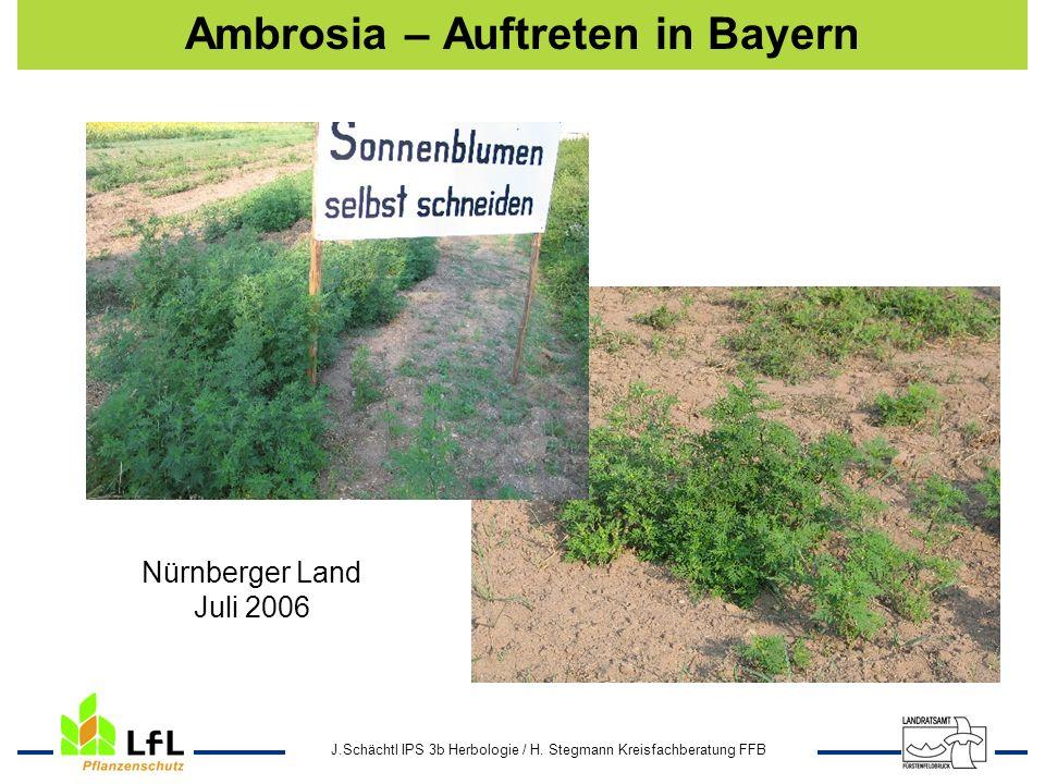 J.Schächtl IPS 3b Herbologie / H. Stegmann Kreisfachberatung FFB Ambrosia – Auftreten in Bayern Nürnberger Land Juli 2006