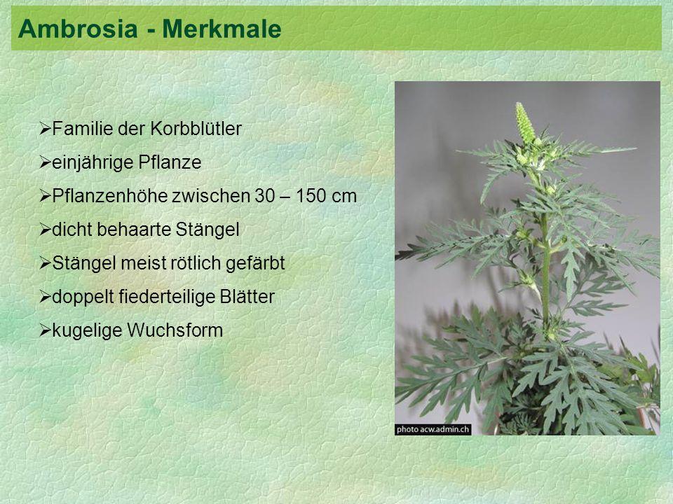 Familie der Korbblütler einjährige Pflanze Pflanzenhöhe zwischen 30 – 150 cm dicht behaarte Stängel Stängel meist rötlich gefärbt doppelt fiederteilig