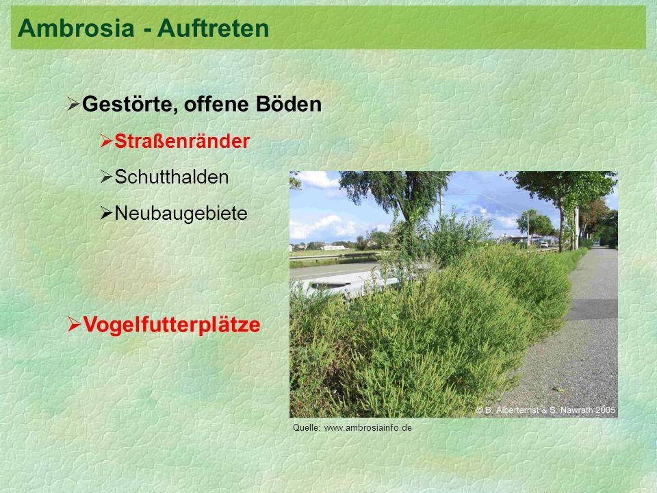 Gestörte, offene Böden Straßenränder Schutthalden Neubaugebiete Vogelfutterplätze Quelle: www.ambrosiainfo.de Ambrosia - Auftreten