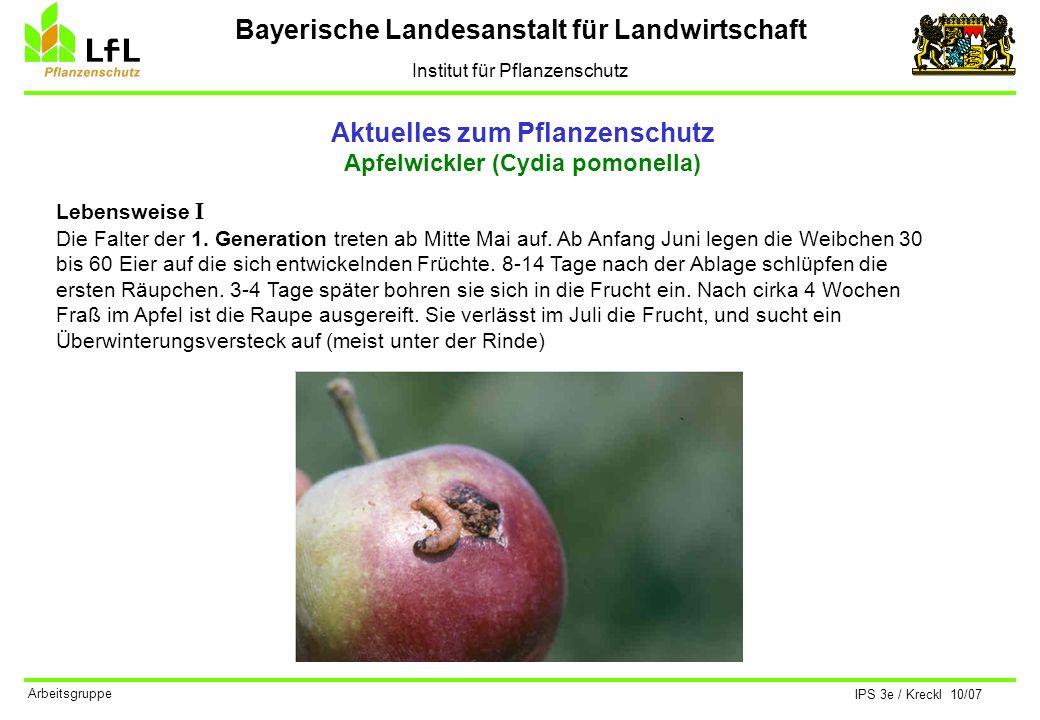 Bayerische Landesanstalt für Landwirtschaft Institut für Pflanzenschutz IPS 3e / Kreckl 10/07 Arbeitsgruppe Aktuelles zum Pflanzenschutz Apfelwickler