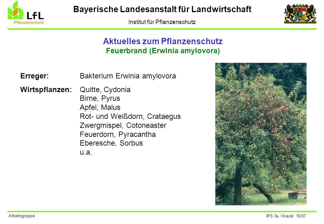 Bayerische Landesanstalt für Landwirtschaft Institut für Pflanzenschutz IPS 3e / Kreckl 10/07 Arbeitsgruppe Aktuelles zum Pflanzenschutz Feuerbrand (Erwinia amylovora) Verbreitung in Bayern
