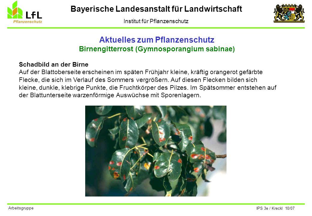 Bayerische Landesanstalt für Landwirtschaft Institut für Pflanzenschutz IPS 3e / Kreckl 10/07 Arbeitsgruppe Aktuelles zum Pflanzenschutz Birnengitterr