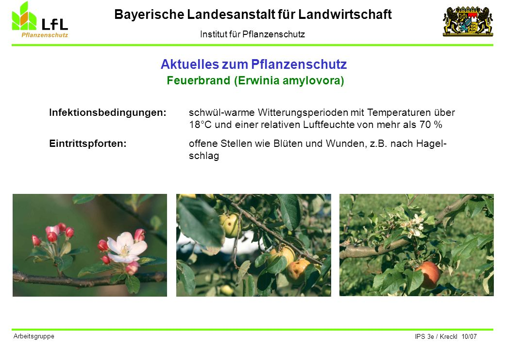Bayerische Landesanstalt für Landwirtschaft Institut für Pflanzenschutz IPS 3e / Kreckl 10/07 Arbeitsgruppe Aktuelles zum Pflanzenschutz Apfelwickler (Cydia pomonella) Der Apfelwickler ist ein Kleinschmetterling aus der Familie der Wickler.