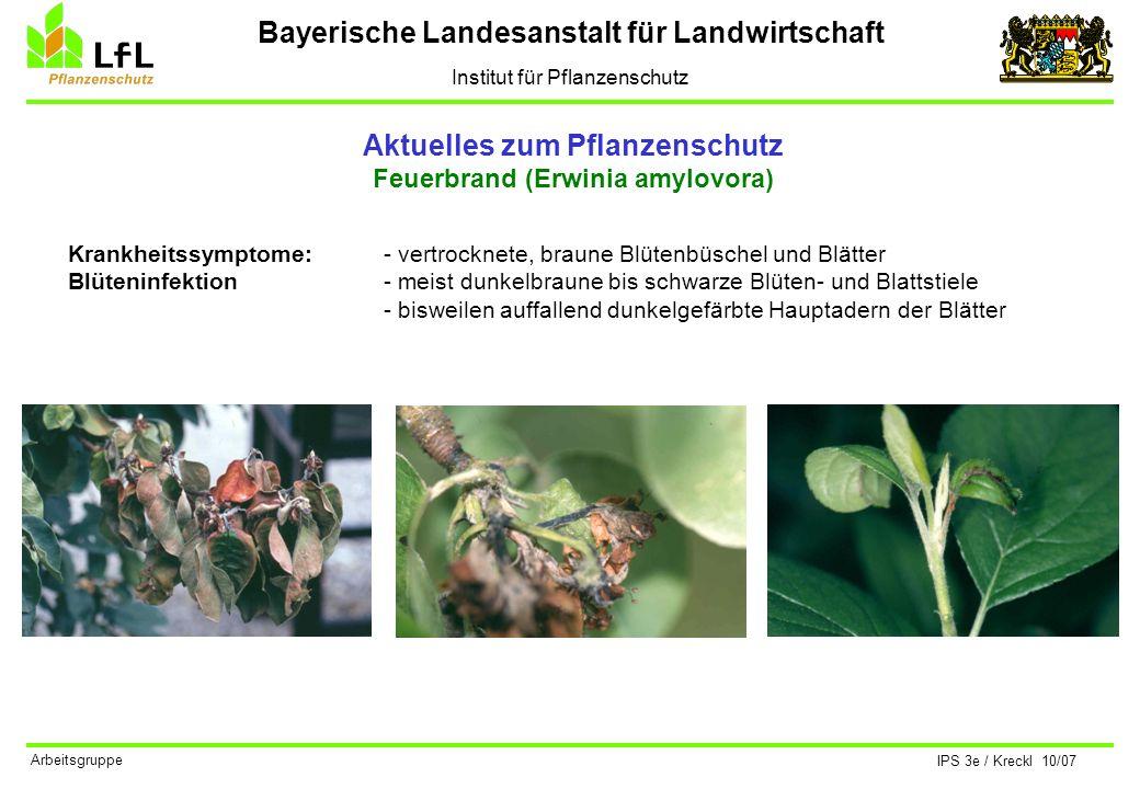 Bayerische Landesanstalt für Landwirtschaft Institut für Pflanzenschutz IPS 3e / Kreckl 10/07 Arbeitsgruppe Aktuelles zum Pflanzenschutz Apfelwickler (Cydia pomonella) Lebensweise I Die Falter der 1.