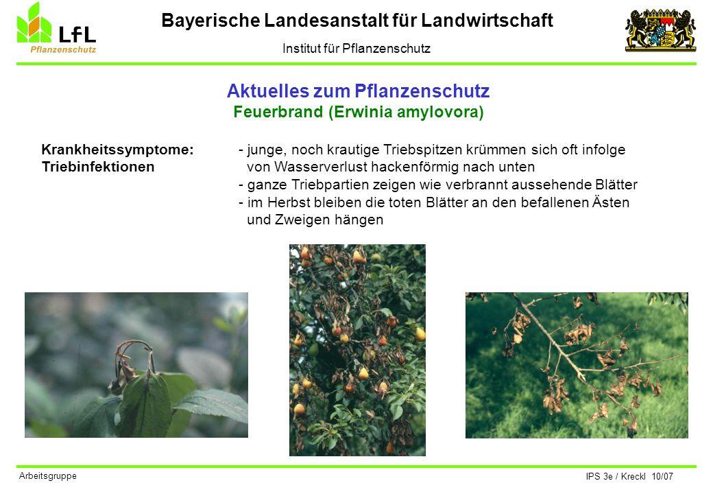 Bayerische Landesanstalt für Landwirtschaft Institut für Pflanzenschutz IPS 3e / Kreckl 10/07 Arbeitsgruppe Aktuelles zum Pflanzenschutz Feuerbrand (Erwinia amylovora) Bekämpfung: Maßnahmen gegen diese gefährliche Krankheit haben sich nach der Befallssituation zu richten.
