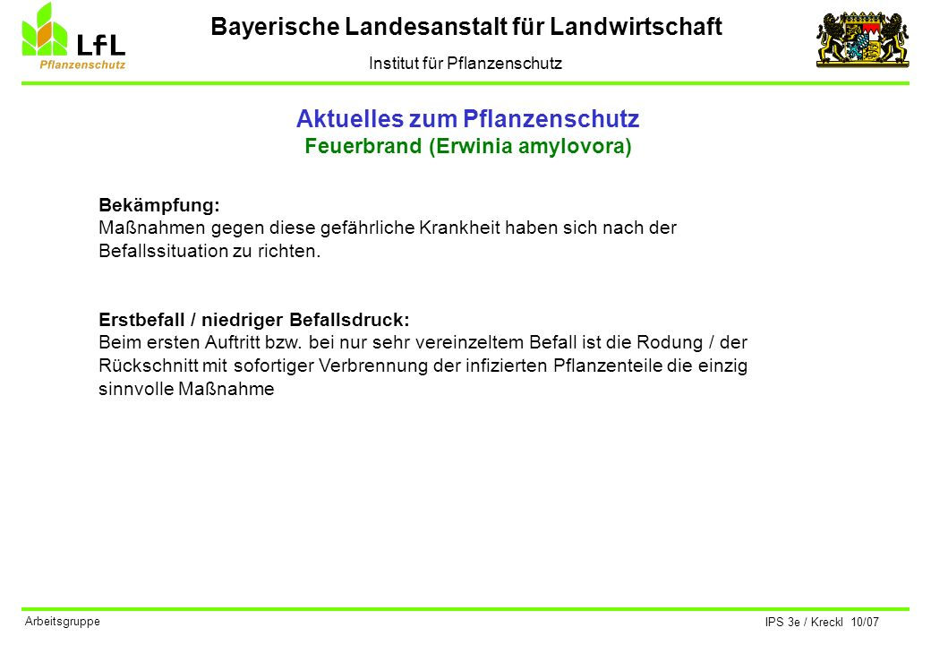 Bayerische Landesanstalt für Landwirtschaft Institut für Pflanzenschutz IPS 3e / Kreckl 10/07 Arbeitsgruppe Aktuelles zum Pflanzenschutz Feuerbrand (Erwinia amylovora) Zu scharfer Rückschnitt fördert die Bildung von Langtrieben (= Wasserschosse).