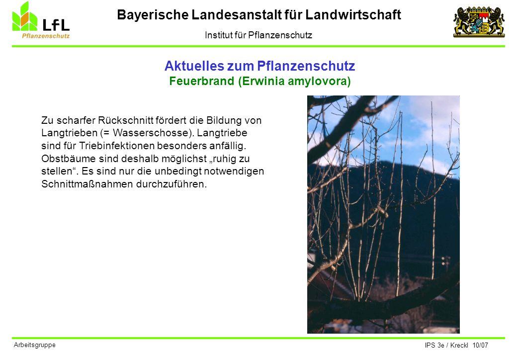 Bayerische Landesanstalt für Landwirtschaft Institut für Pflanzenschutz IPS 3e / Kreckl 10/07 Arbeitsgruppe Aktuelles zum Pflanzenschutz Feuerbrand (E