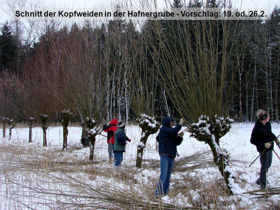 Schnitt der Kopfweiden in der Hafnergrube - Vorschlag: 19. od. 26.2.
