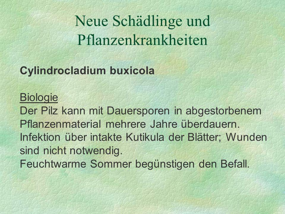 Neue Schädlinge und Pflanzenkrankheiten Cylindrocladium buxicola Biologie Der Pilz kann mit Dauersporen in abgestorbenem Pflanzenmaterial mehrere Jahr