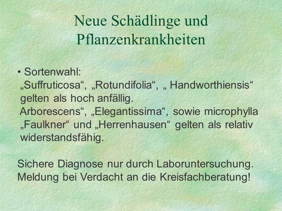 Neue Schädlinge und Pflanzenkrankheiten Sortenwahl: Suffruticosa, Rotundifolia, Handworthiensis gelten als hoch anfällig. Arborescens, Elegantissima,