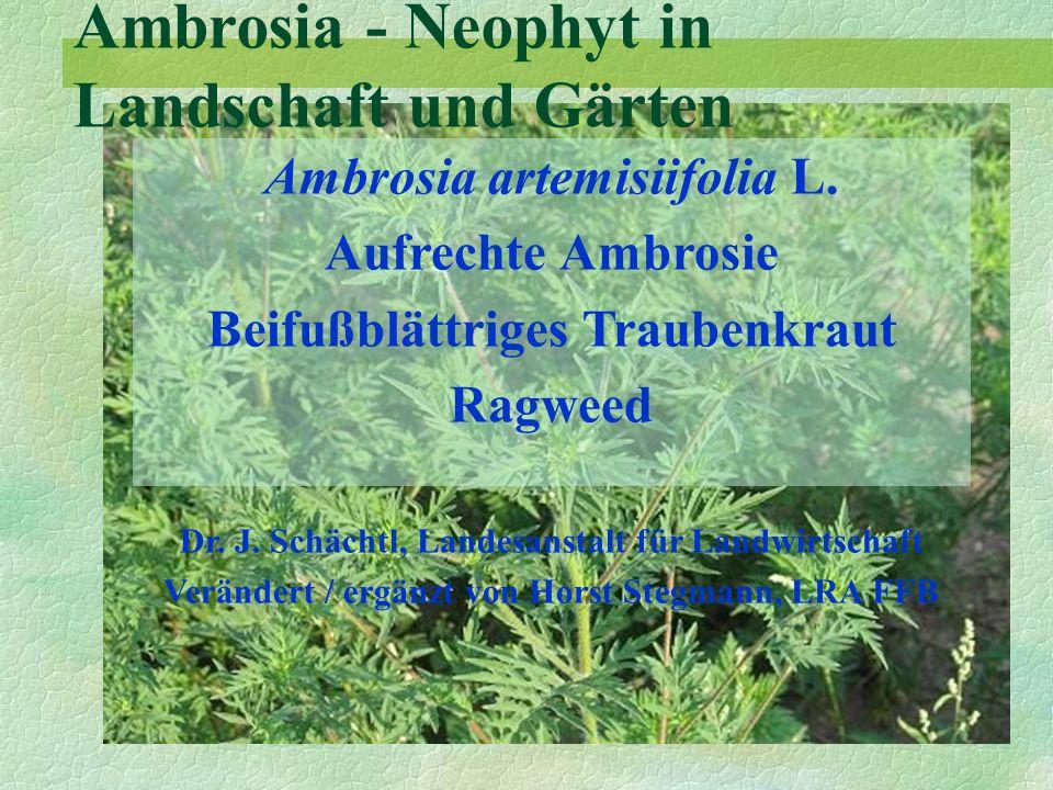 Ambrosia artemisiifolia L. Aufrechte Ambrosie Beifußblättriges Traubenkraut Ragweed Dr. J. Schächtl, Landesanstalt für Landwirtschaft Verändert / ergä