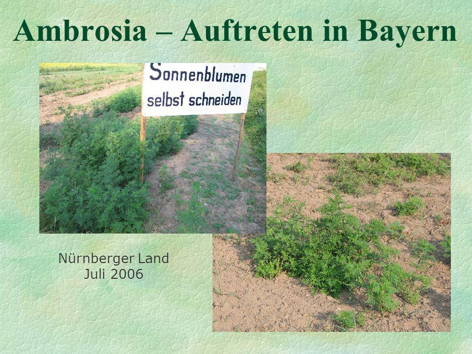 Ambrosia – Auftreten in Bayern Nürnberger Land Juli 2006