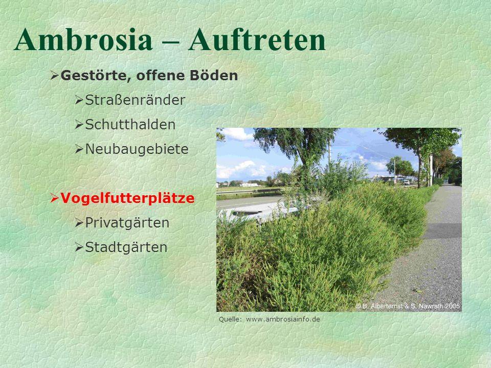 Ambrosia – Auftreten Gestörte, offene Böden Straßenränder Schutthalden Neubaugebiete Vogelfutterplätze Privatgärten Stadtgärten Quelle: www.ambrosiain