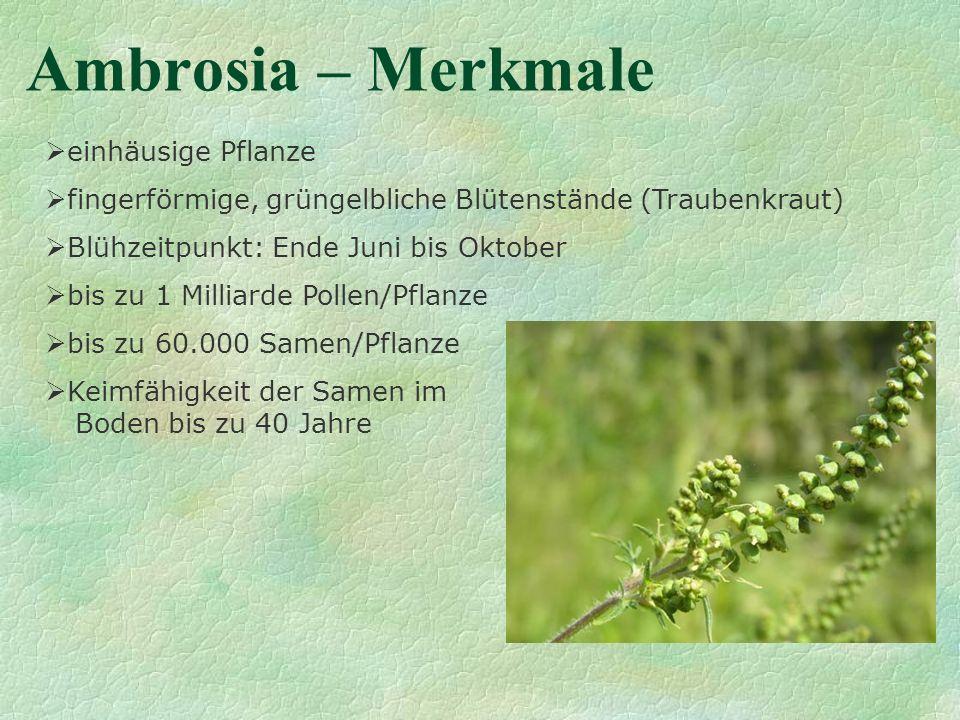 Ambrosia – Merkmale einhäusige Pflanze fingerförmige, grüngelbliche Blütenstände (Traubenkraut) Blühzeitpunkt: Ende Juni bis Oktober bis zu 1 Milliard