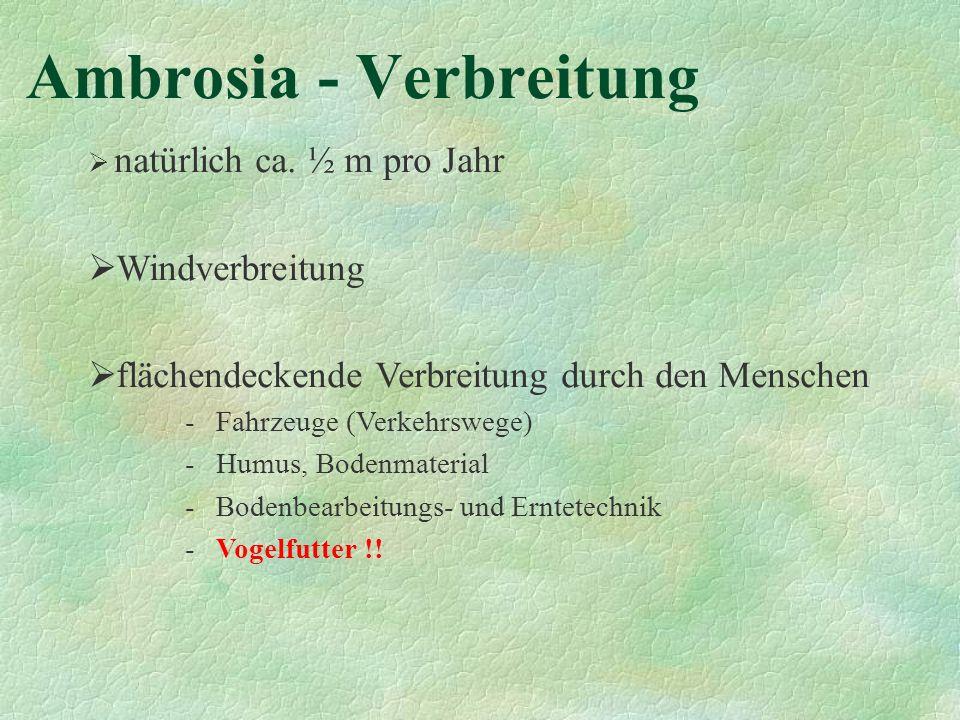 Ambrosia - Verbreitung natürlich ca. ½ m pro Jahr Windverbreitung flächendeckende Verbreitung durch den Menschen - Fahrzeuge (Verkehrswege) - Humus, B