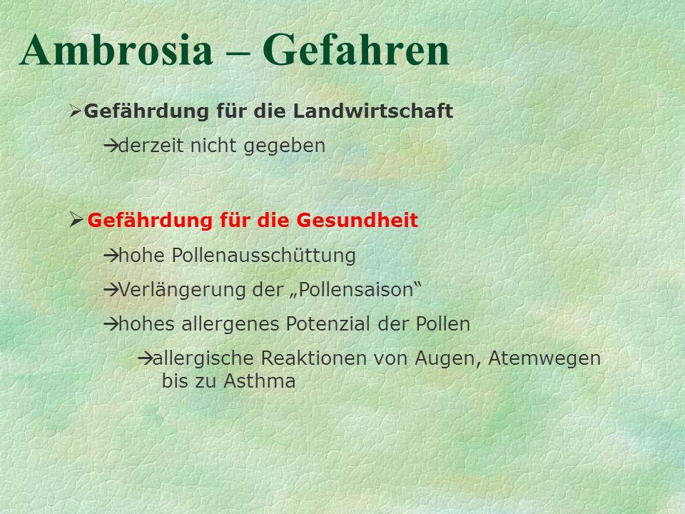 Ambrosia – Gefahren Gefährdung für die Landwirtschaft derzeit nicht gegeben Gefährdung für die Gesundheit hohe Pollenausschüttung Verlängerung der Pol