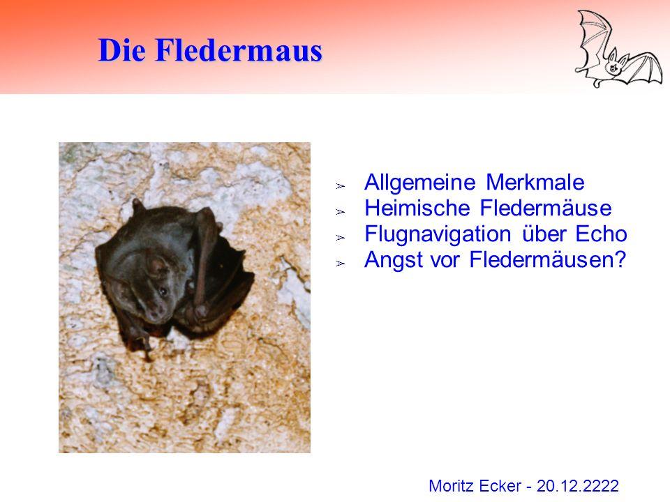 Moritz Ecker - 20.12.2222 Die Fledermaus Allgemeine Merkmale Heimische Fledermäuse Flugnavigation über Echo Angst vor Fledermäusen?