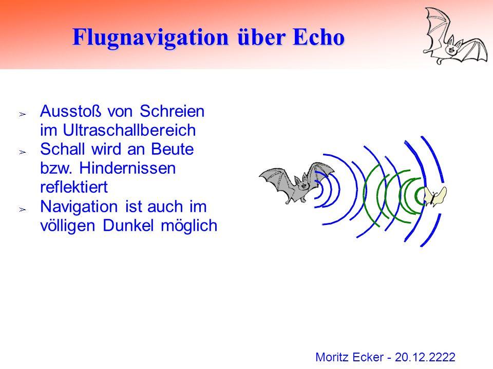 Moritz Ecker - 20.12.2222 Flugnavigation über Echo Ausstoß von Schreien im Ultraschallbereich Schall wird an Beute bzw. Hindernissen reflektiert Navig