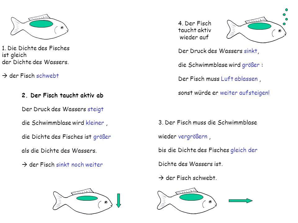 1. Die Dichte des Fisches ist gleich der Dichte des Wassers. der Fisch schwebt 2. Der Fisch taucht aktiv ab Der Druck des Wassers steigt die Schwimmbl