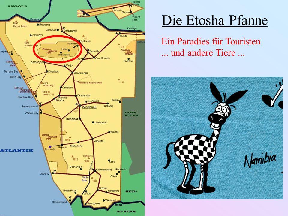 Die Etosha Pfanne Ein Paradies für Touristen... und andere Tiere...