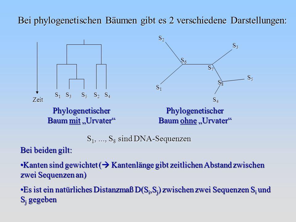 Bei phylogenetischen Bäumen gibt es 2 verschiedene Darstellungen: S2S2S2S2 S1S1S1S1 S3S3S3S3 S4S4S4S4 S5S5S5S5 S6S6S6S6 S7S7S7S7 S8S8S8S8 Phylogenetischer Baum ohne Urvater Bei beiden gilt: Kanten sind gewichtet ( Kantenlänge gibt zeitlichen Abstand zwischen zwei Sequenzen an)Kanten sind gewichtet ( Kantenlänge gibt zeitlichen Abstand zwischen zwei Sequenzen an) Phylogenetischer Baum mit Urvater Zeit S 1 S 3 S 5 S 2 S 4 S 1,..., S 8 sind DNA-Sequenzen Es ist ein natürliches Distanzmaß D(S i,S j ) zwischen zwei Sequenzen S i und S j gegebenEs ist ein natürliches Distanzmaß D(S i,S j ) zwischen zwei Sequenzen S i und S j gegeben