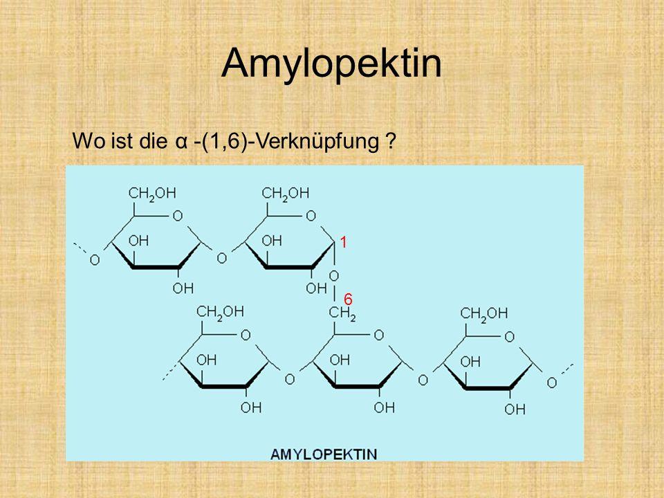 Amylopektin 1 6 Wo ist die α -(1,6)-Verknüpfung ?