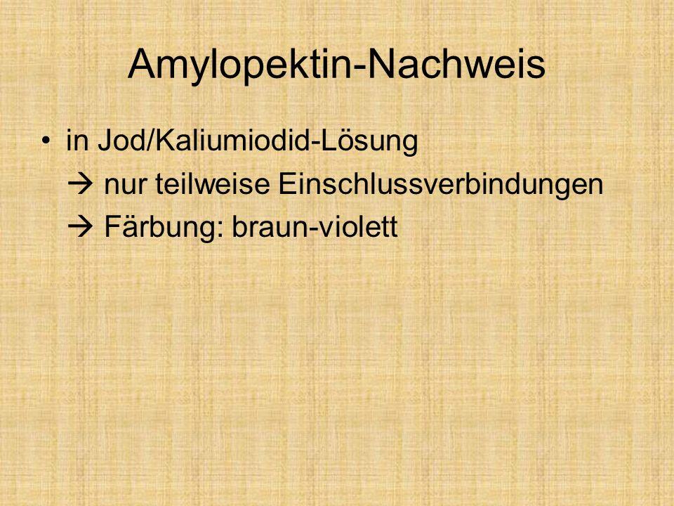 Amylopektin-Nachweis in Jod/Kaliumiodid-Lösung nur teilweise Einschlussverbindungen Färbung: braun-violett