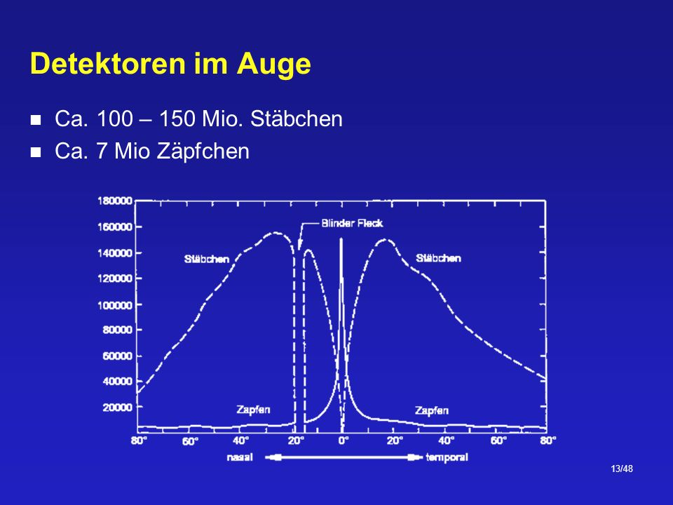 13/48 Detektoren im Auge Ca. 100 – 150 Mio. Stäbchen Ca. 7 Mio Zäpfchen