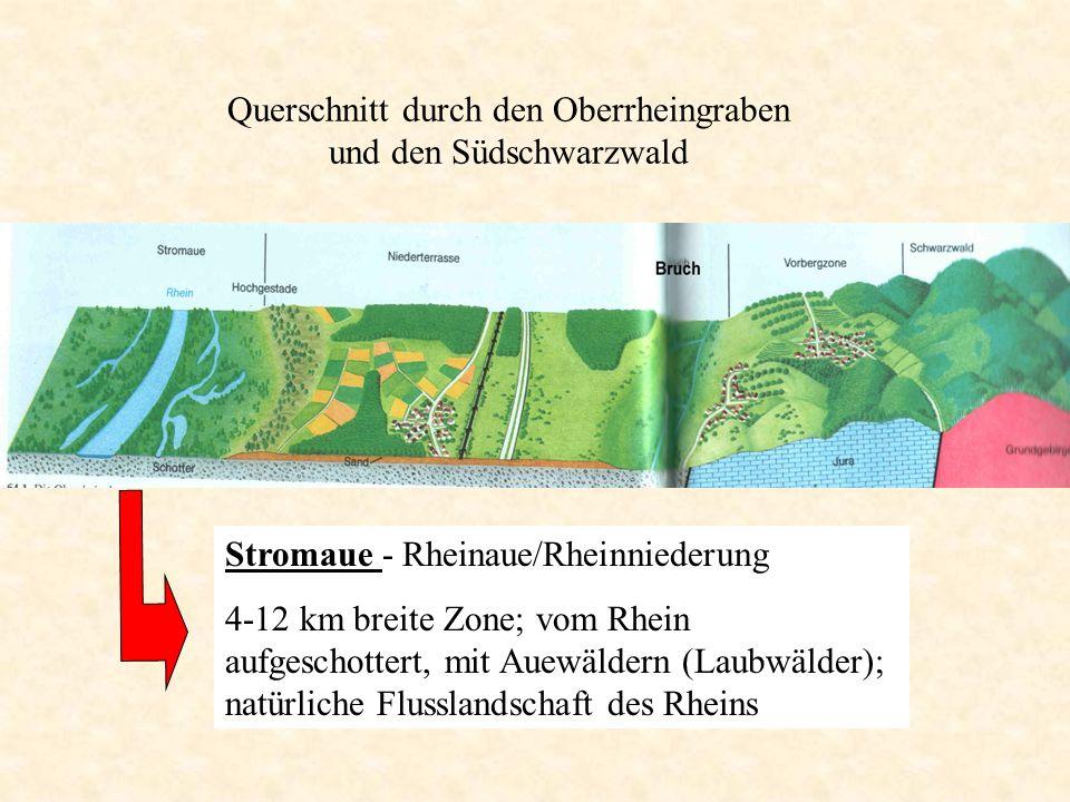 Stromaue - Rheinaue/Rheinniederung 4-12 km breite Zone; vom Rhein aufgeschottert, mit Auewäldern (Laubwälder); natürliche Flusslandschaft des Rheins Q