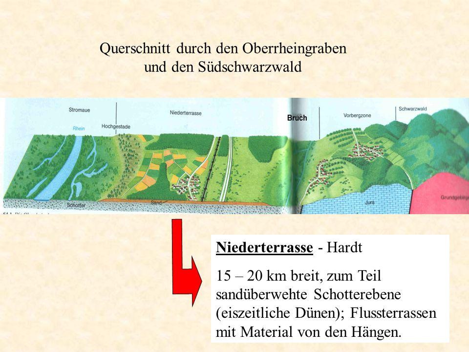 Niederterrasse - Hardt 15 – 20 km breit, zum Teil sandüberwehte Schotterebene (eiszeitliche Dünen); Flussterrassen mit Material von den Hängen. Quersc