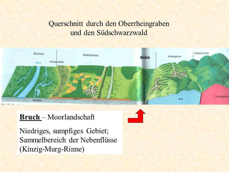 Bruch – Moorlandschaft Niedriges, sumpfiges Gebiet; Sammelbereich der Nebenflüsse (Kinzig-Murg-Rinne)