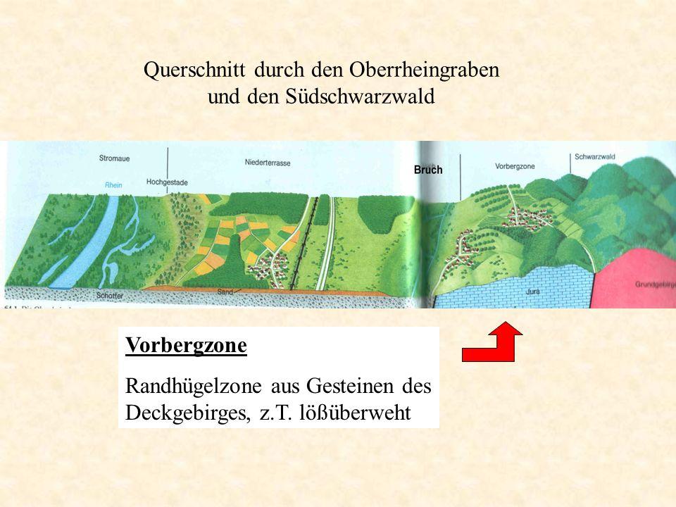 Querschnitt durch den Oberrheingraben und den Südschwarzwald Vorbergzone Randhügelzone aus Gesteinen des Deckgebirges, z.T. lößüberweht