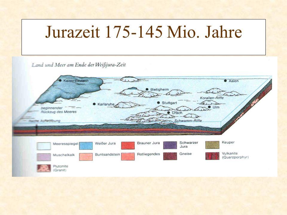 Jurazeit 175-145 Mio. Jahre