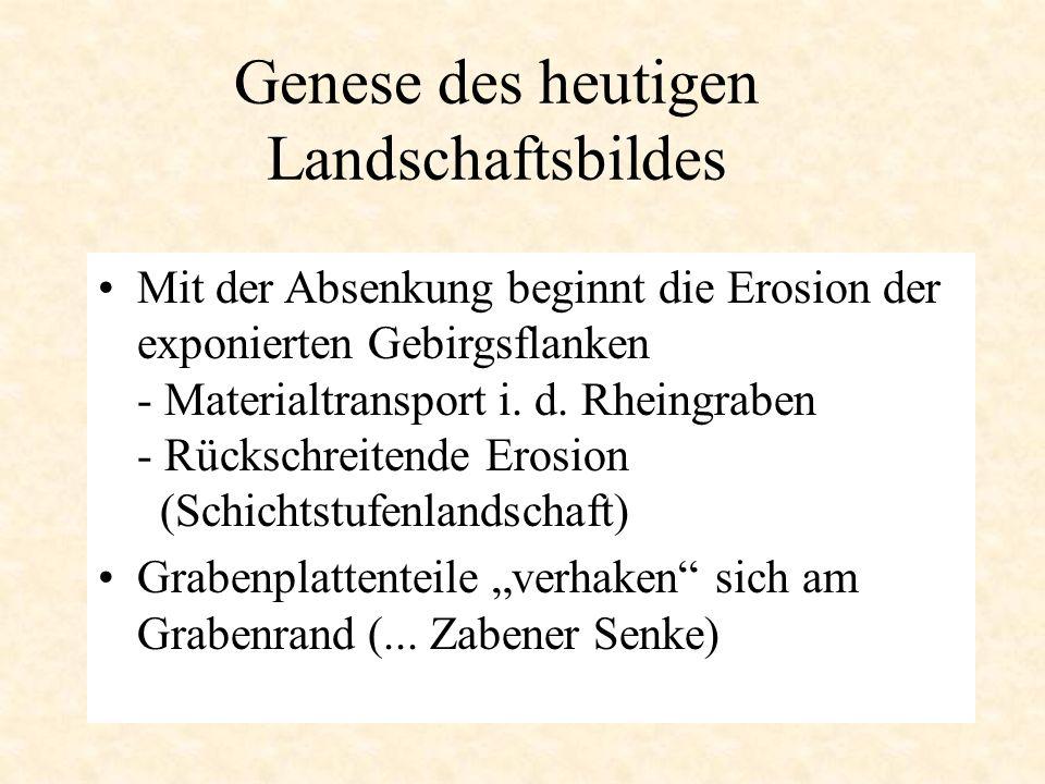 Genese des heutigen Landschaftsbildes Mit der Absenkung beginnt die Erosion der exponierten Gebirgsflanken - Materialtransport i. d. Rheingraben - Rüc