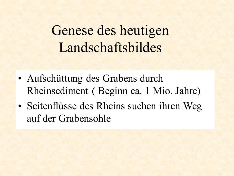 Genese des heutigen Landschaftsbildes Aufschüttung des Grabens durch Rheinsediment ( Beginn ca. 1 Mio. Jahre) Seitenflüsse des Rheins suchen ihren Weg