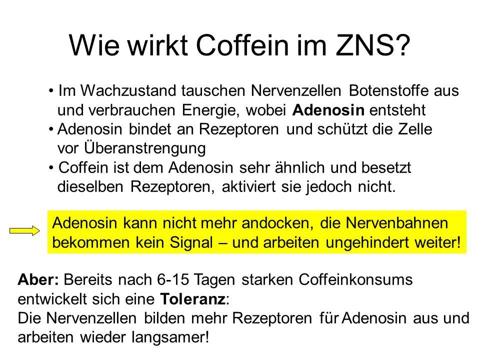 Wie wirkt Coffein im ZNS? Im Wachzustand tauschen Nervenzellen Botenstoffe aus und verbrauchen Energie, wobei Adenosin entsteht Adenosin bindet an Rez