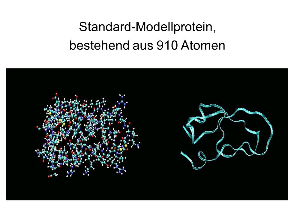 Standard-Modellprotein, bestehend aus 910 Atomen