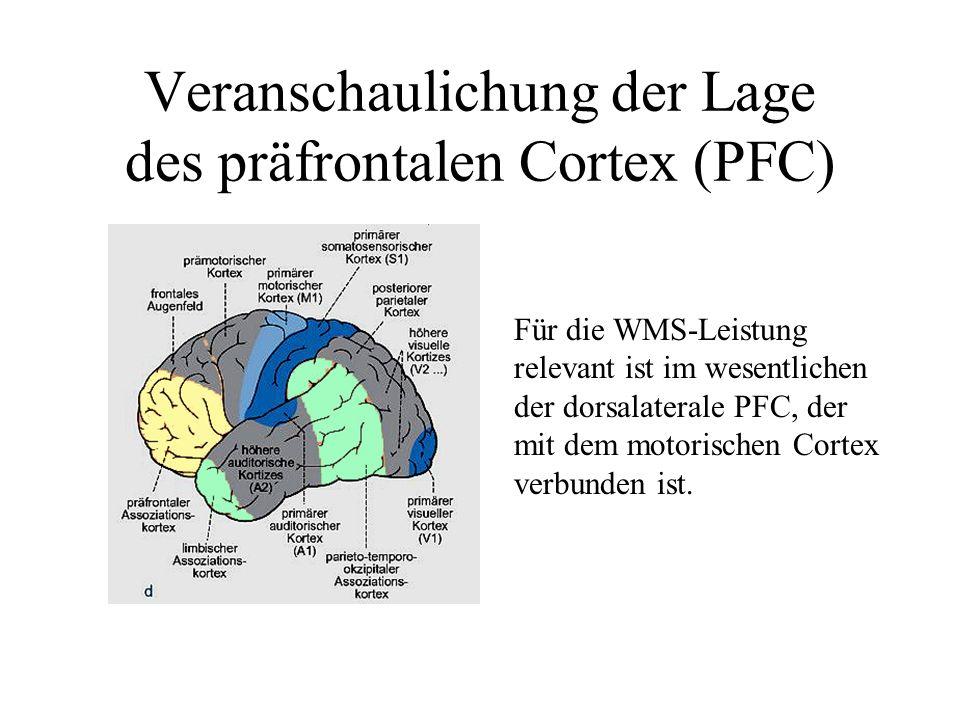 Veranschaulichung der Lage des präfrontalen Cortex (PFC) Für die WMS-Leistung relevant ist im wesentlichen der dorsalaterale PFC, der mit dem motorisc