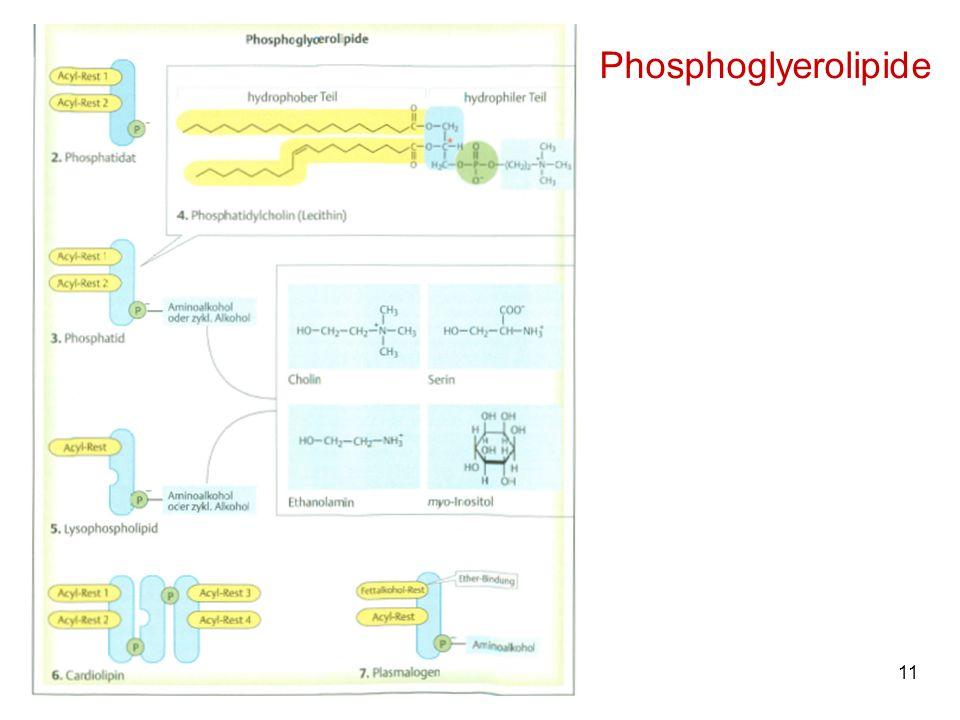 11M. Kresken Phosphoglyerolipide