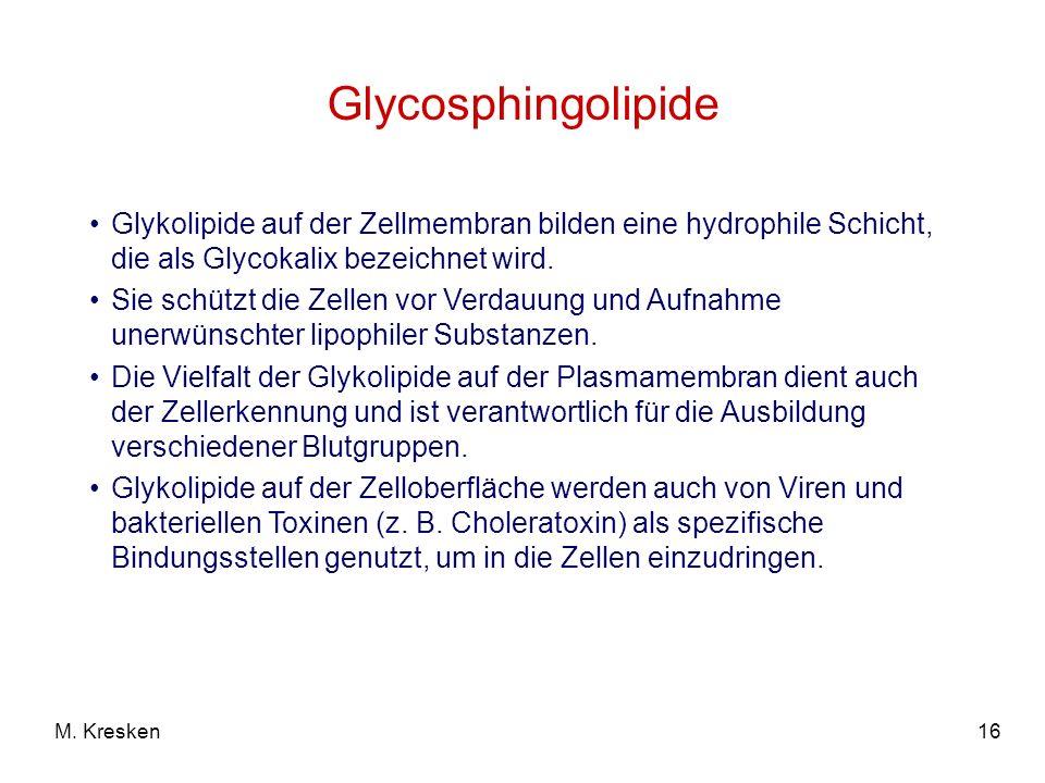 16M. Kresken Glycosphingolipide Glykolipide auf der Zellmembran bilden eine hydrophile Schicht, die als Glycokalix bezeichnet wird. Sie schützt die Ze