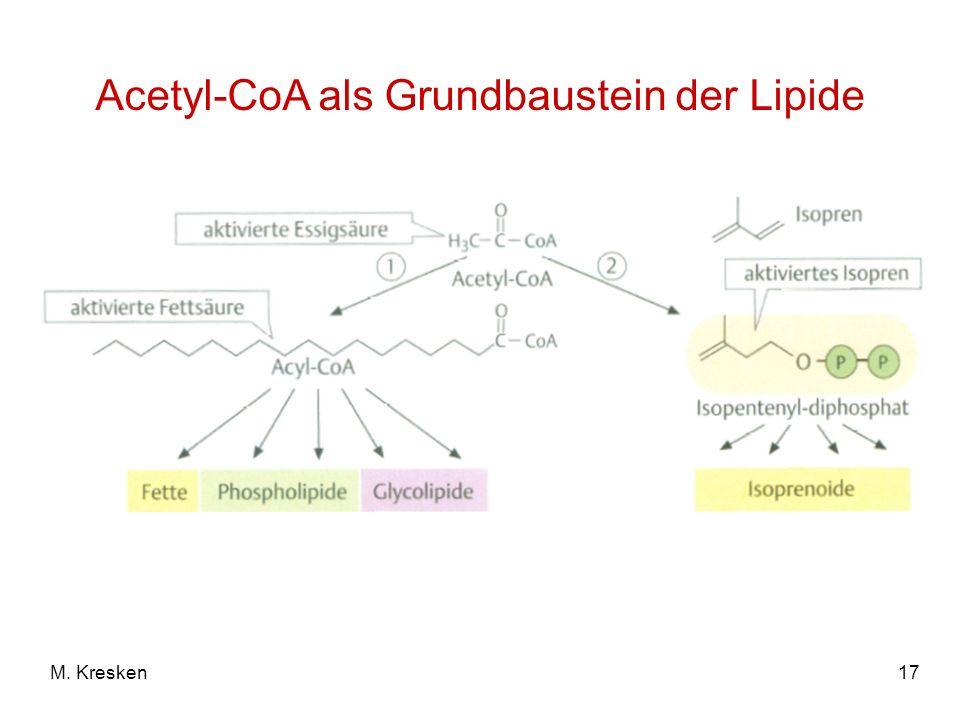 17M. Kresken Acetyl-CoA als Grundbaustein der Lipide