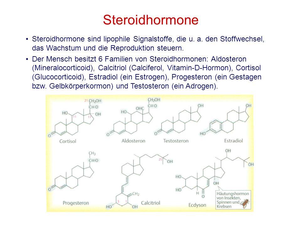 Steroidhormone Steroidhormone sind lipophile Signalstoffe, die u. a. den Stoffwechsel, das Wachstum und die Reproduktion steuern. Der Mensch besitzt 6