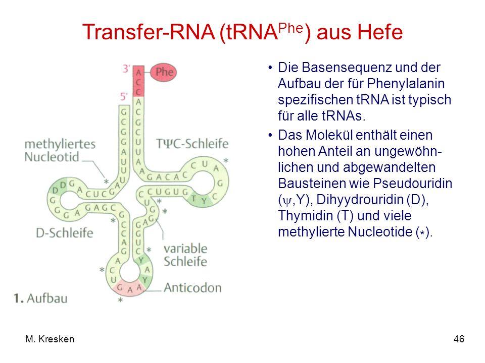 46M. Kresken Transfer-RNA (tRNA Phe ) aus Hefe Die Basensequenz und der Aufbau der für Phenylalanin spezifischen tRNA ist typisch für alle tRNAs. Das