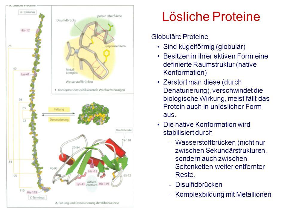 Globuläre Proteine Sind kugelförmig (globulär) Besitzen in ihrer aktiven Form eine definierte Raumstruktur (native Konformation) Zerstört man diese (d