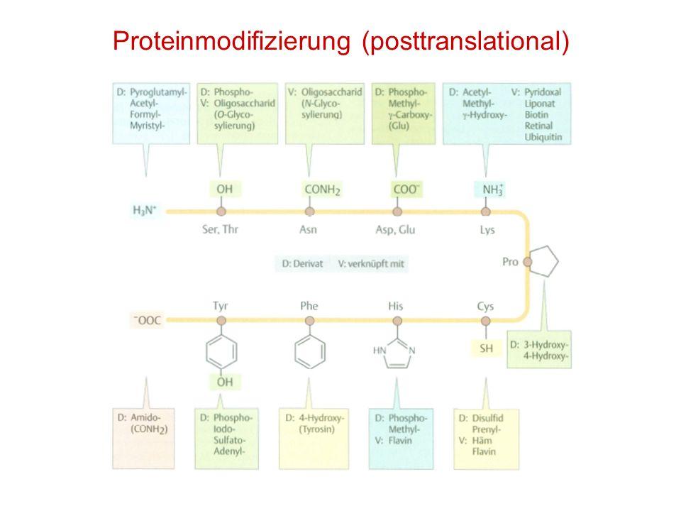 Proteinmodifizierung (posttranslational)