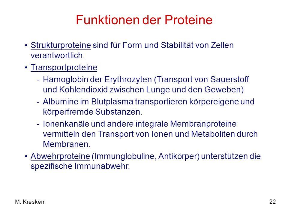 22M. Kresken Funktionen der Proteine Strukturproteine sind für Form und Stabilität von Zellen verantwortlich. Transportproteine -Hämoglobin der Erythr