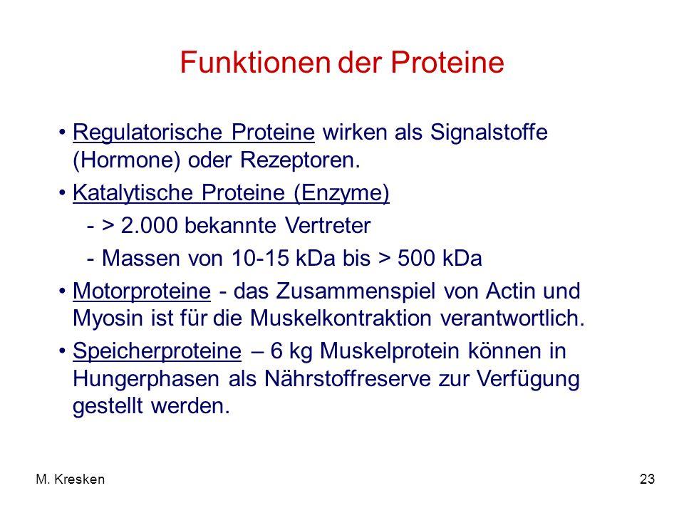 23M. Kresken Funktionen der Proteine Regulatorische Proteine wirken als Signalstoffe (Hormone) oder Rezeptoren. Katalytische Proteine (Enzyme) -> 2.00